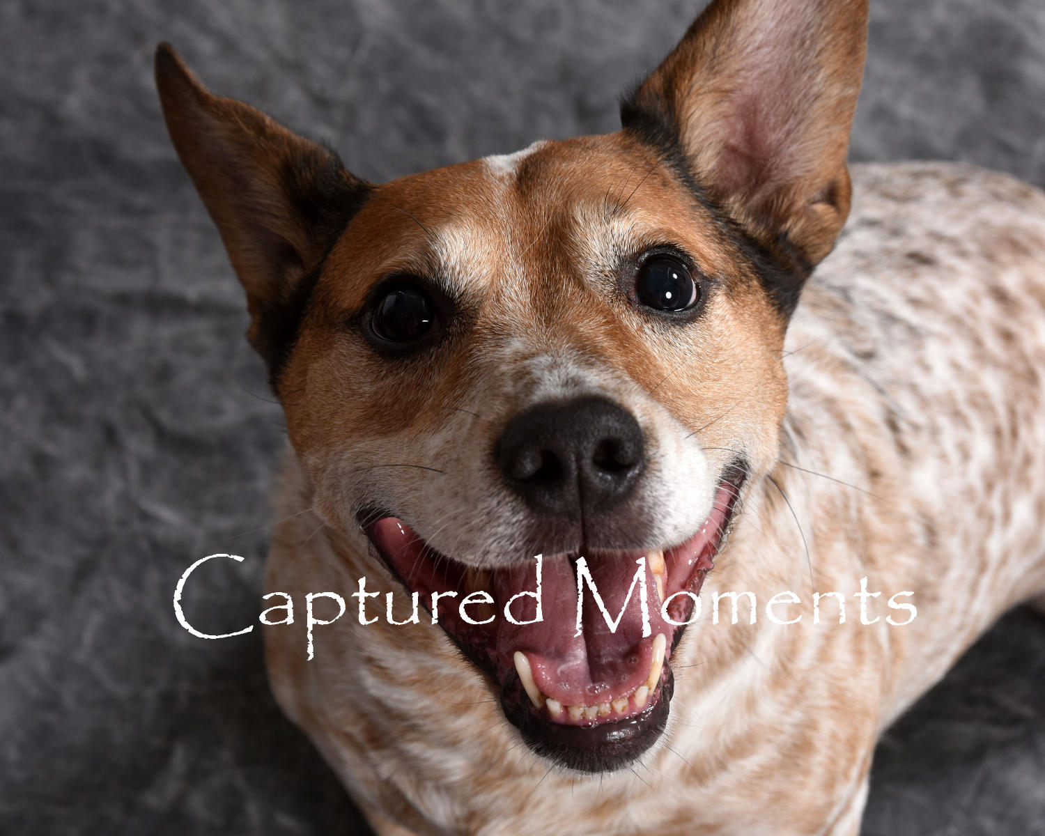 : Furry Family : Captured Moments Art Photography in studio on location